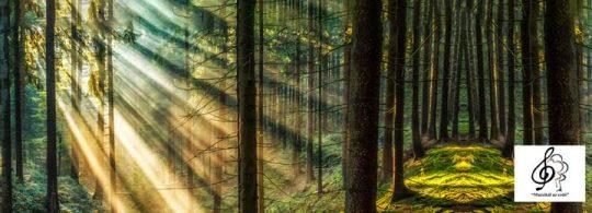 Muzsikál az erdő Kékestetőn