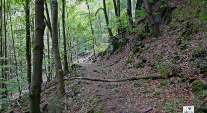 Erdőrezervátum túra Kékestetőn 04