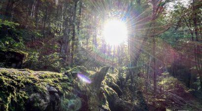 Erdőrezervátum túra Kékestetőn 08