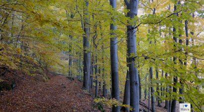 Erdőrezervátum túra Kékestetőn 10