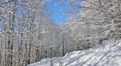 Erdőrezervátum túra Kékestetőn 11