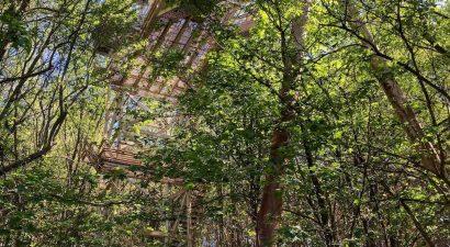 Sombokor kör túra a Kékestetőn 11