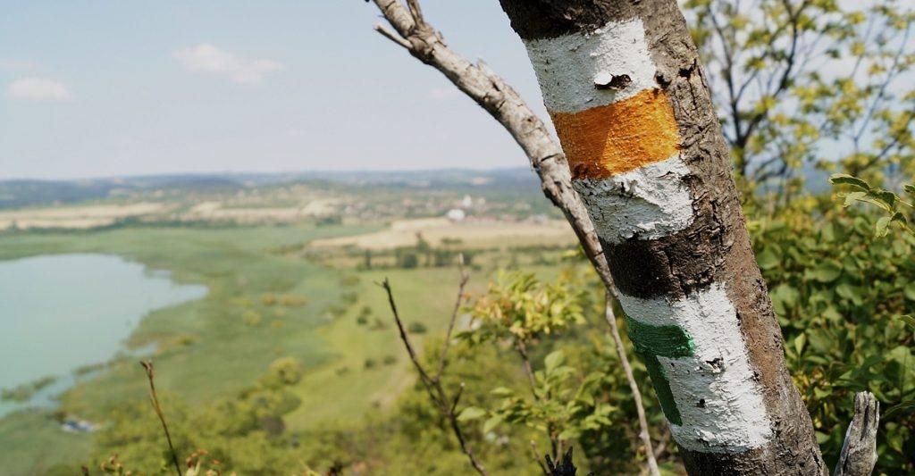Turistajelzések egy fa törzsén.